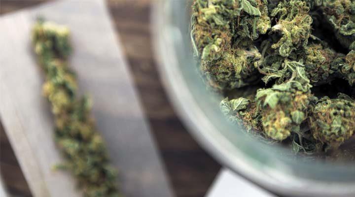 cannabis recreativo