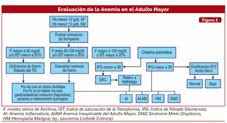 Anemia cronica en el adulto mayor